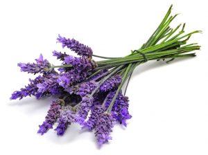 Lavender-burn salve