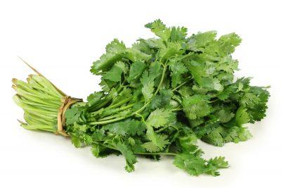 preserve fresh cilantro
