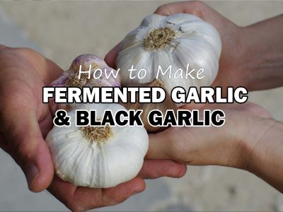 how to make black garlic or fermented garlic recipe